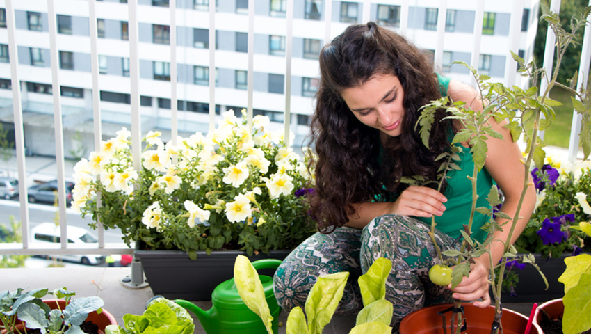 Online Growing Food in Small Gardens Course by International open academy